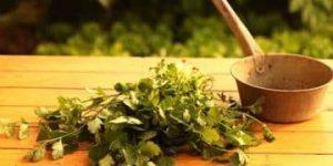 dietas acompañadas de cilantro